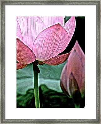 Lotus Heaven - 129 Framed Print by Larry Knipfing