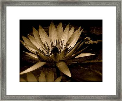 Lotus II Framed Print