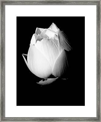 Lotus In Black And White Framed Print
