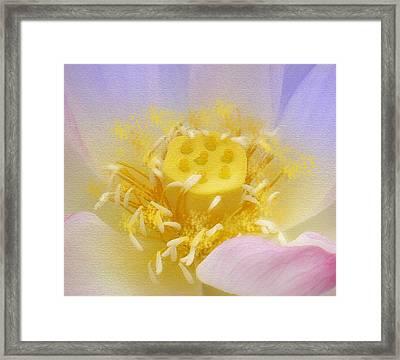 Lotus In Side Framed Print by Lila Shravani