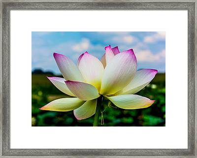 Lotus Framed Print by Jon Woodhams