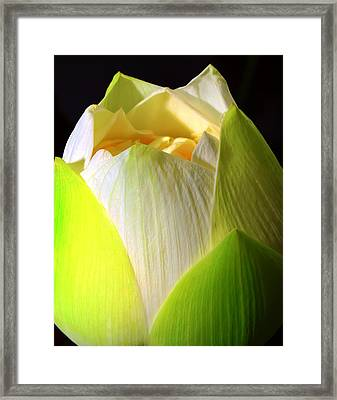 Lotus Framed Print by Kara  Stewart
