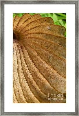 Framed Print featuring the photograph Lotus Leaf by Jane Ford