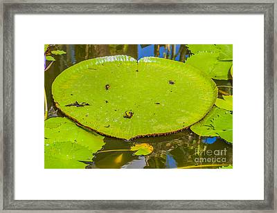 Lotus Leaf Framed Print
