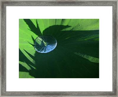 Lotus Leaf With Dew   Framed Print