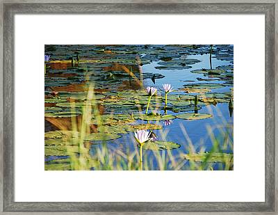 Framed Print featuring the photograph Lotus-lily Pond 2 by Ankya Klay