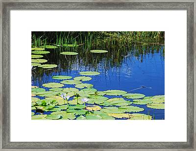 Framed Print featuring the photograph Lotus-lily Pond by Ankya Klay