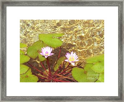 Framed Print featuring the photograph Lotus by Mini Arora