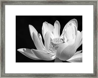 Lotus Open To The Sun Framed Print by Sabrina L Ryan