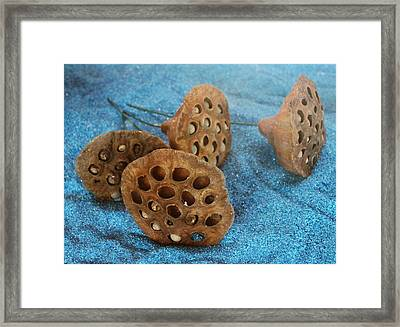 Framed Print featuring the photograph Lotus Pods by Diane Alexander