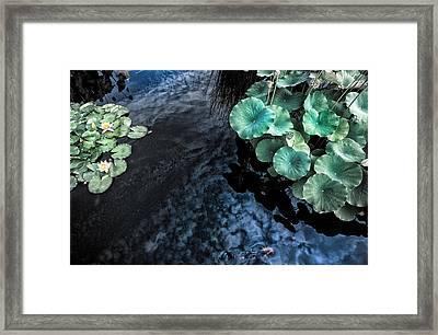Lotus Pond Fantasia Framed Print