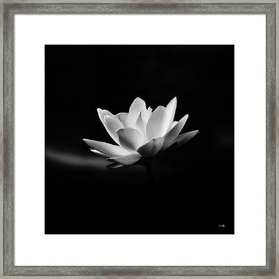 Lotus Framed Print by Scott Pellegrin
