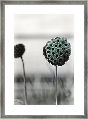 Lotus Seedpod 1 Framed Print