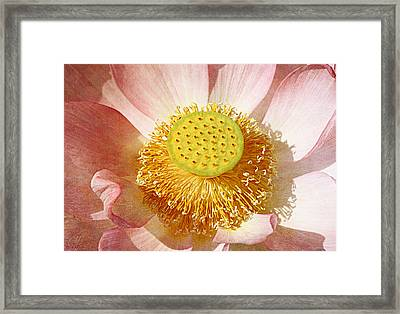 Lotus Study Framed Print
