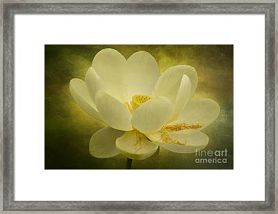 Framed Print featuring the photograph Lotus by Vicki DeVico
