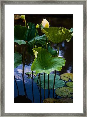 Lotuses In The Evening Light. Vertical Framed Print by Jenny Rainbow
