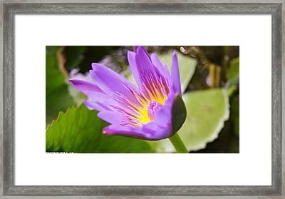 Lotut Framed Print by Gornganogphatchara Kalapun