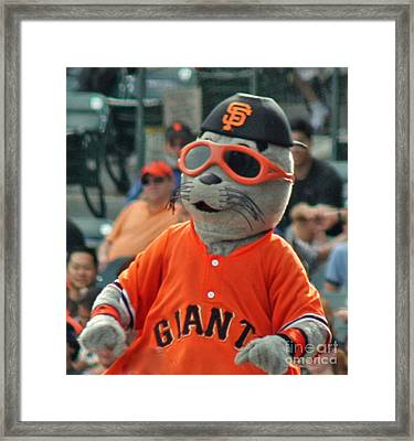 Lou Seal San Francisco Giants Mascot Framed Print