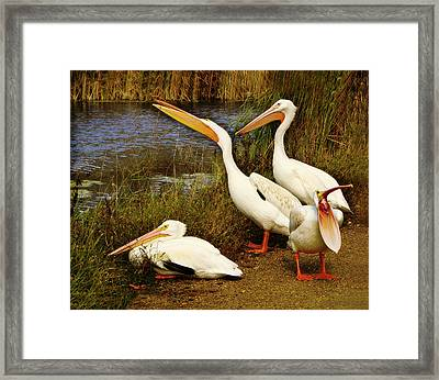 Loud Mouth Framed Print by Nikolyn McDonald