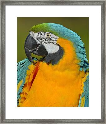 Loud Framed Print by Tony Beck