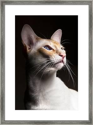 Louie Framed Print
