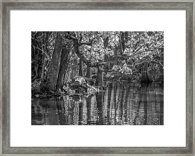 Louisiana Bayou - Bw Framed Print by Steve Harrington