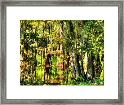 Louisiana Bayou Framed Print