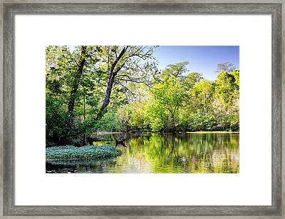 Louisiana Bayou Framed Print by Kathleen K Parker