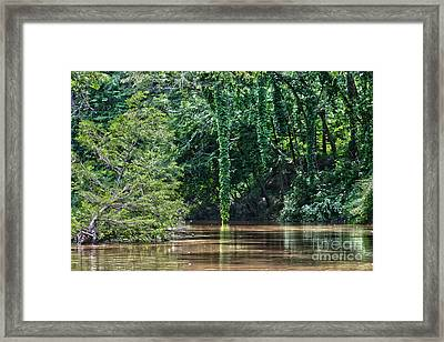 Louisiana Bayou Toro Creek Swamp Framed Print by D Wallace