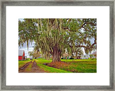 Louisiana Country Oil Framed Print by Steve Harrington