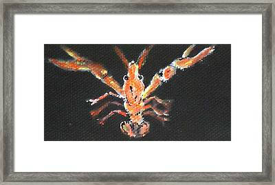 Louisiana Crawfish Framed Print by Katie Spicuzza