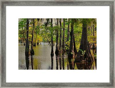 Louisiana Cypress Swamp Framed Print by Ester  Rogers