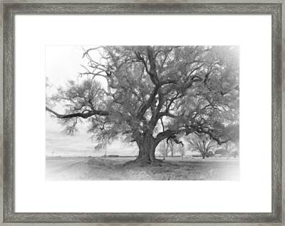 Louisiana Dreamin' Monochrome Framed Print by Steve Harrington