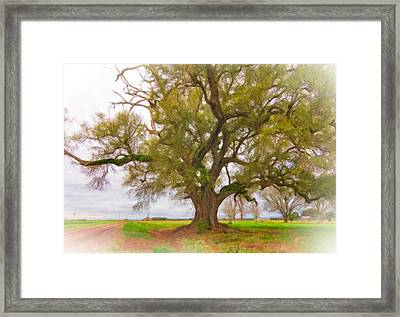 Louisiana Dreamin' Framed Print by Steve Harrington
