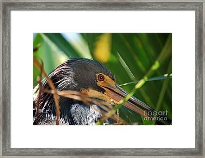 Louisiana Eye Framed Print