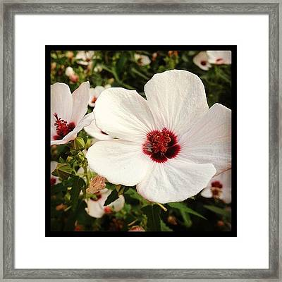 Louisiana Wild Flower  Framed Print