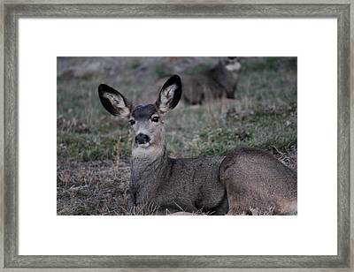 Lounging Framed Print