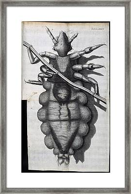 Louse, 17th-century Microscopy Framed Print by Science Photo Library