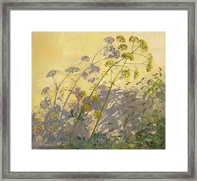 Lovage Clematis And Shadows Framed Print by Timothy  Easton