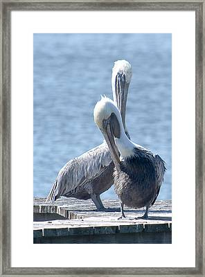 Love At First Site Framed Print by Nancy Edwards