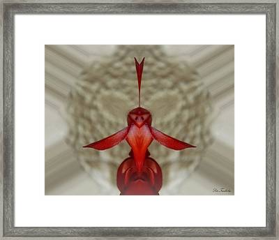 Love Bird Framed Print by Pete Trenholm