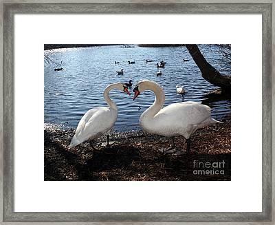 Love Bird Swans Framed Print