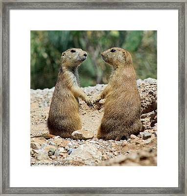 Framed Print featuring the photograph Love Birds by Elaine Malott