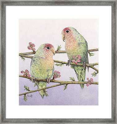 Love Birds Framed Print by Pat Scott