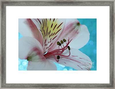 Love Blossom Framed Print by Krissy Katsimbras