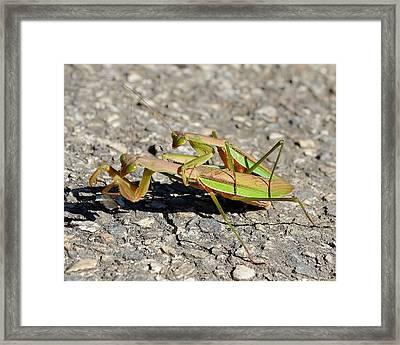 Love Bugs - Praying Mantis Framed Print