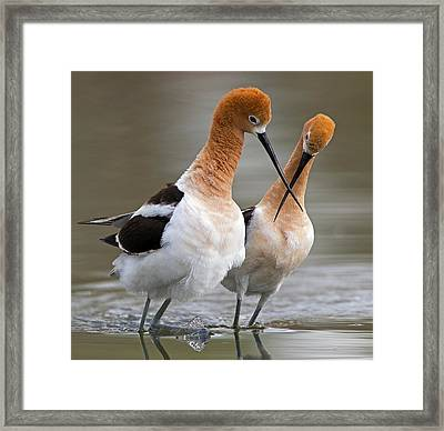 Love Crossing ... Framed Print