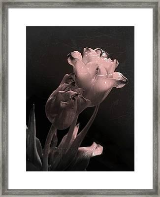 Love Endures Framed Print by Shirley Sirois