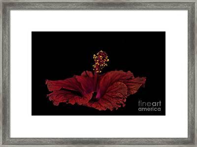Framed Print featuring the photograph Love Flower by Marija Djedovic