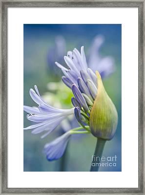 Love Flower Framed Print